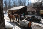 Maple Sugaring 30-20-11836