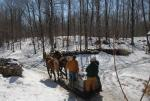 Maple Sugaring 30-20-11841