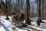 Maple Sugaring 30-20-11900