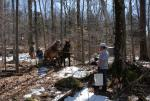 Maple Sugaring 30-20-11901