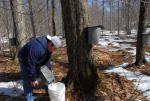 Maple Sugaring 30-20-11902