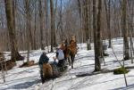 Maple Sugaring 30-20-11909