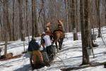 Maple Sugaring 30-20-11910