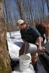 Maple Sugaring 30-20-11913