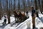 Maple Sugaring 30-20-11915