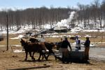 Maple Sugaring 30-20-11931