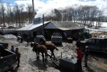 Maple Sugaring 30-20-11939