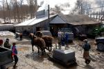 Maple Sugaring 30-20-11945