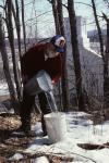 Maple Sugaring 30-20-00417