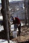 Maple Sugaring 30-20-00426